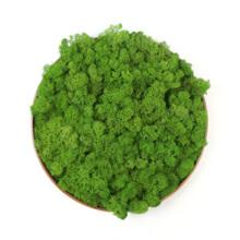 circle moss art
