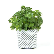 small potted faux plants PZ062