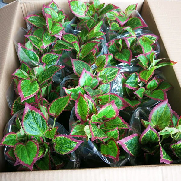 sunwing small fake plants in pots