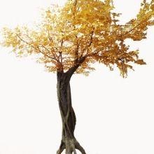 winding golden banyan tree