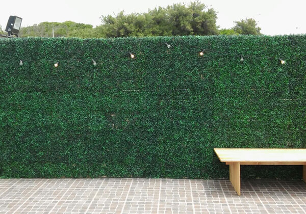 outdoor boxwood hedges