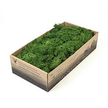 Bulk Wholesale Stabilised Moss