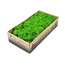 Decoration Preserved Stabilized Reindeer Moss