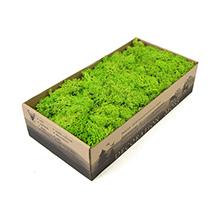 Natural Eco-friendly Dried Reindeer Lichen