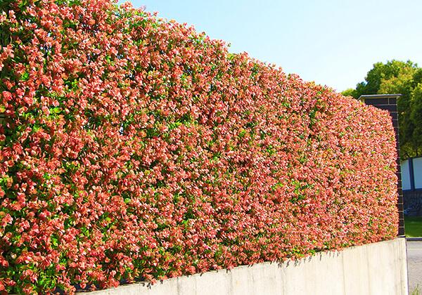 artificial hedges panels