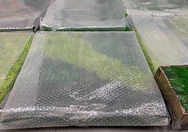 moss wall suppliers