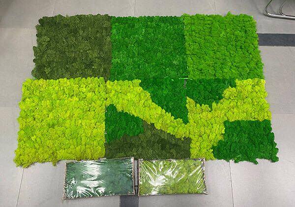 preserved moss supplier