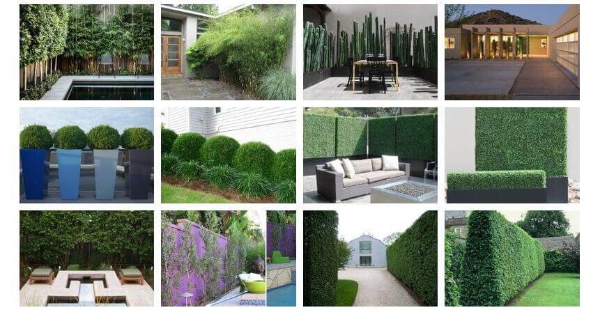 The Complete Guides: Garden and landscape contractors import artificial plants from China
